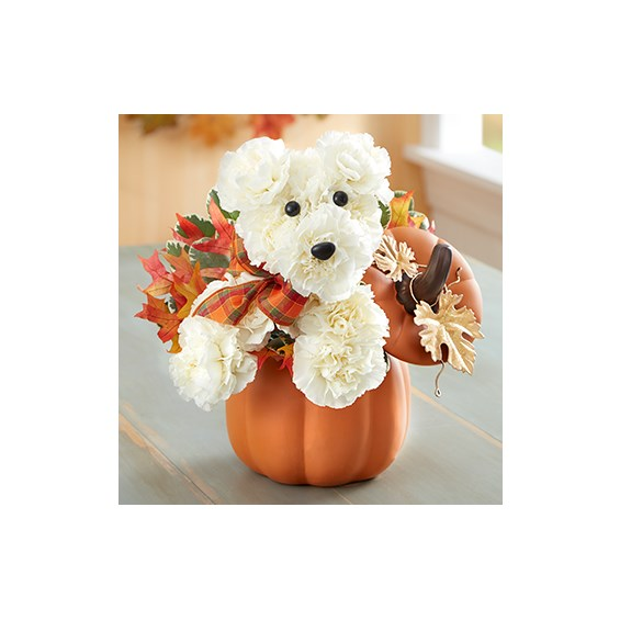 a-DOG-able-Fall-white-Flower-Arrangement-in-orange-pumpkin-container