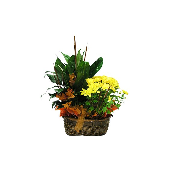 Beautiful-green-plant-in-a-basket-with-a-fall-bow