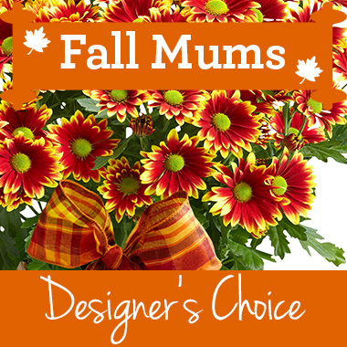 Designers-Choice-Mum-Decorated-in-a-Basket-perfect-gift