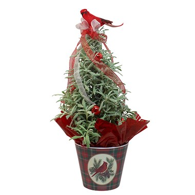Lavender-tree-plant-for-christmas-or-holiday-gifts