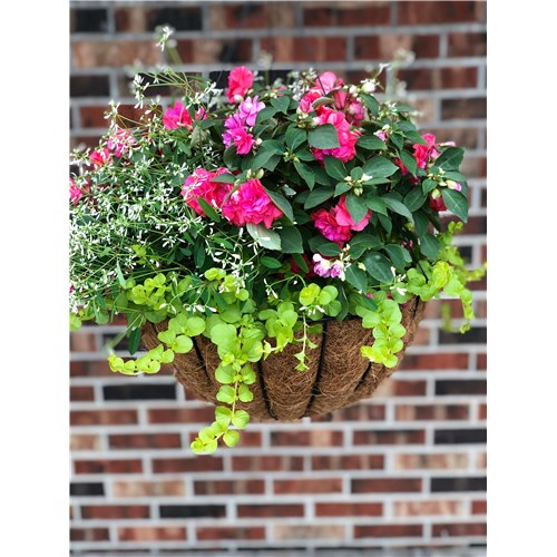 wire-and-moss-shade-hanging-basket-compressed